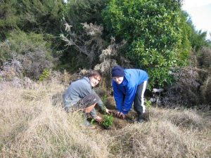 doc-takaka-volunteers-planting-rata-2
