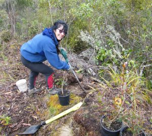 liz-besley-planting-rata-on-razor-back-ridge-overlooking-konewa-stream-pohangina-valley-sm