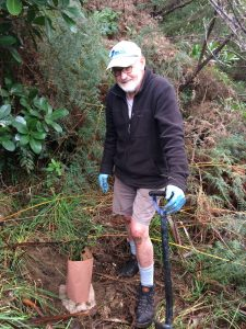 planting-northern-rata-in-queen-elizabeth-park-kapiti-coast-5