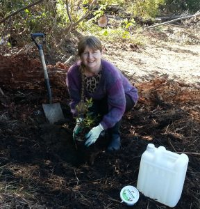 Tracey Shaw Whenuakite Kiwi Care planting pohutukawa sm